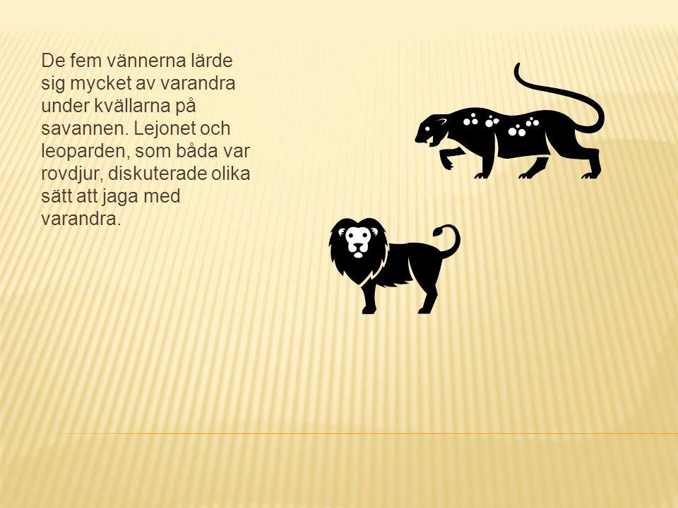 De fem vännerna lärde sig mycket av varandra under kvällarna på savannen. Lejonet och leoparden, som båda var rovdjur, diskuterade olika sätt att jaga