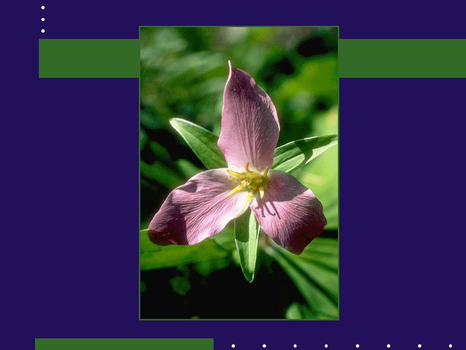 • Bakgrundsinformation; livsberättelse, sjukdomshistoria inkl.
