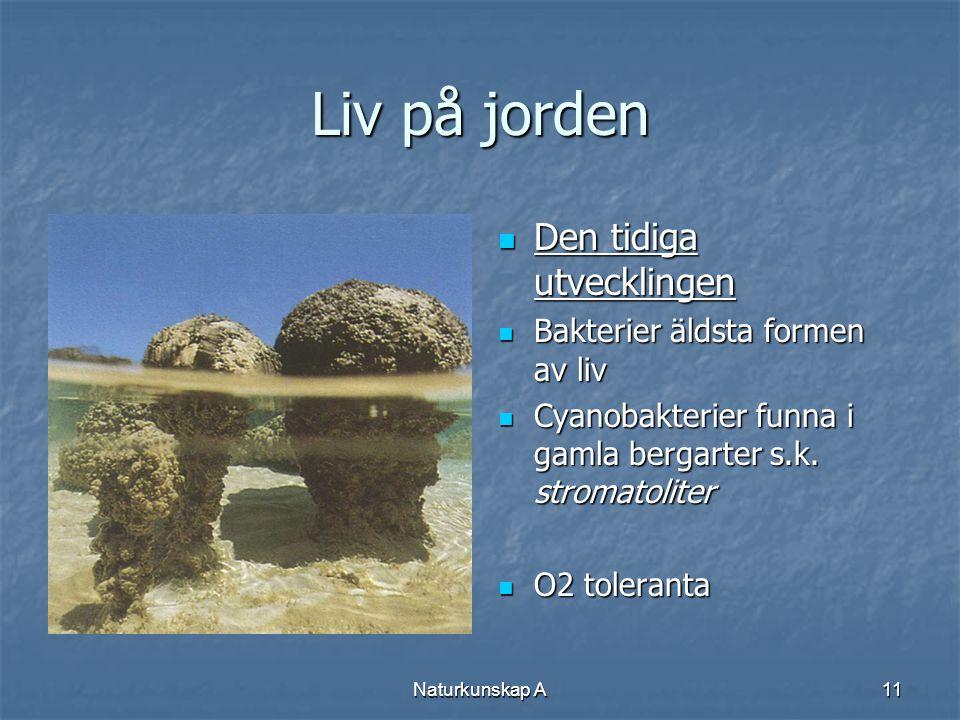 Naturkunskap A11 Liv på jorden  Den tidiga utvecklingen  Bakterier äldsta formen av liv  Cyanobakterier funna i gamla bergarter s.k. stromatoliter