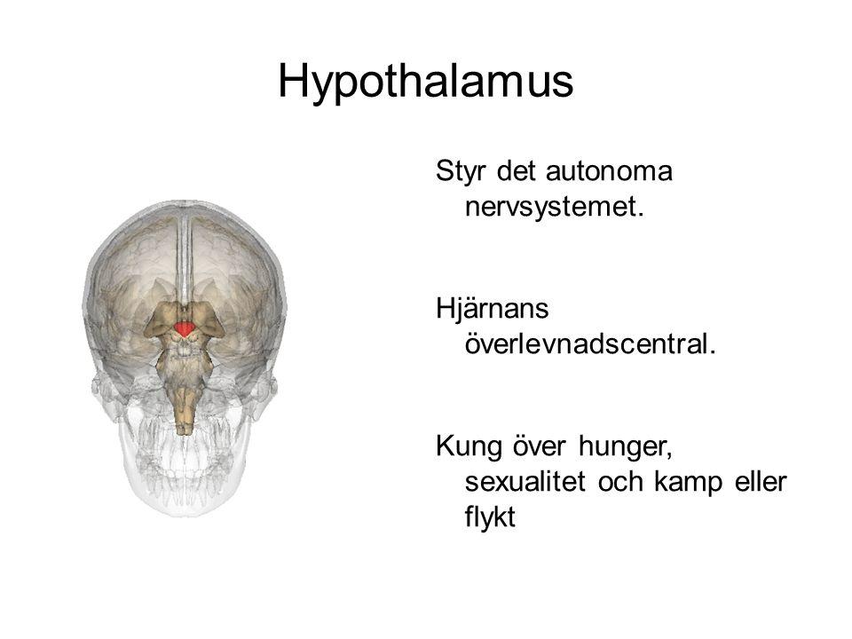 Hypothalamus Styr det autonoma nervsystemet. Hjärnans överlevnadscentral. Kung över hunger, sexualitet och kamp eller flykt