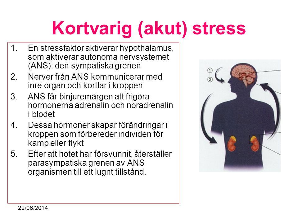 Kortvarig (akut) stress 1.En stressfaktor aktiverar hypothalamus, som aktiverar autonoma nervsystemet (ANS): den sympatiska grenen 2.Nerver från ANS k