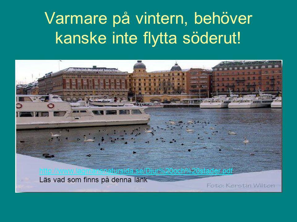 Varmare på vintern, behöver kanske inte flytta söderut! http://www.lagmansnatursida.se/Djur%20och%20stader.pdf Läs vad som finns på denna länk