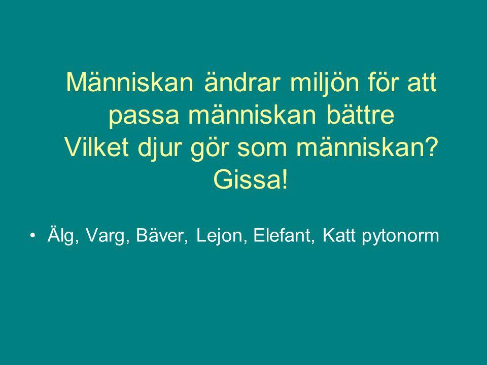Människan ändrar miljön för att passa människan bättre Vilket djur gör som människan? Gissa! •Älg, Varg, Bäver, Lejon, Elefant, Katt pytonorm