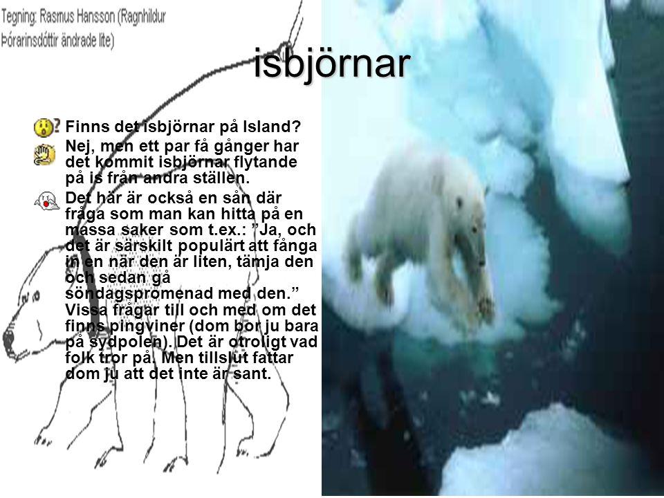 isbjörnar •Finns det isbjörnar på Island.