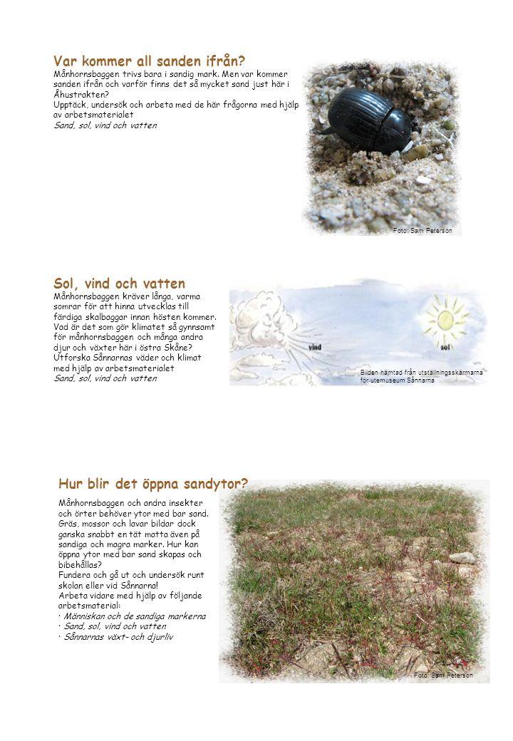 Månhornsbaggen och andra insekter och örter behöver ytor med bar sand. Gräs, mossor och lavar bildar dock ganska snabbt en tät matta även på sandiga o