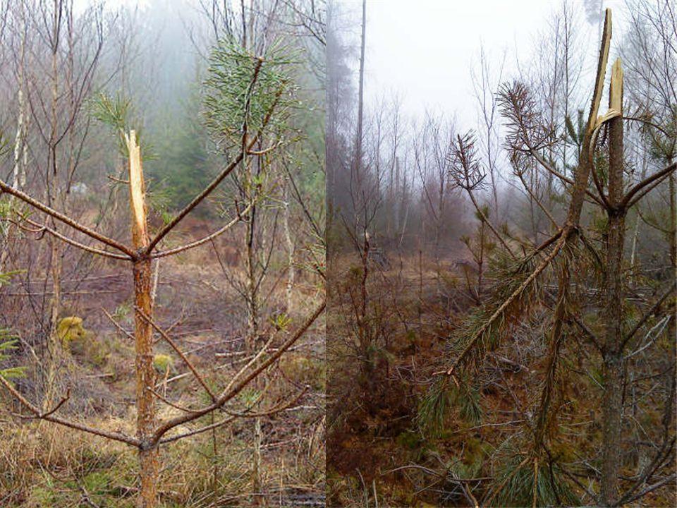 Rådande paradigm •Skogspolitiken (Prop 2007/08:108): Frihet under ansvar •Jaktpolitiken (Prop 1991/92:9): Jägare och markägare ska ta ett större ansvar för att anpassa viltstammarna så att skador kan minska.