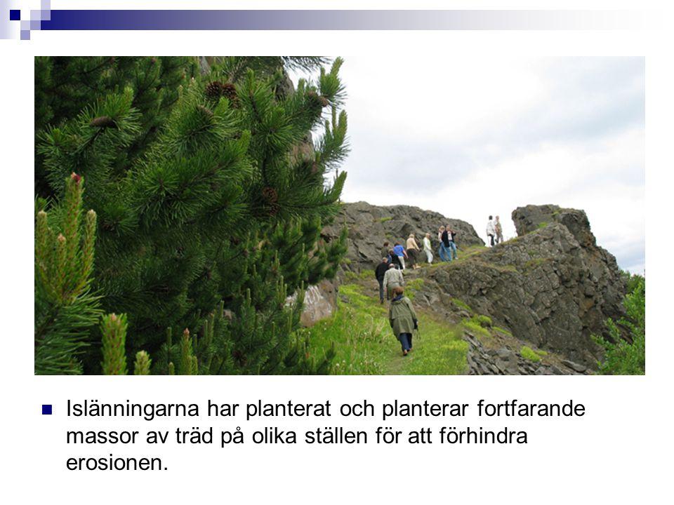  Islänningarna har planterat och planterar fortfarande massor av träd på olika ställen för att förhindra erosionen.