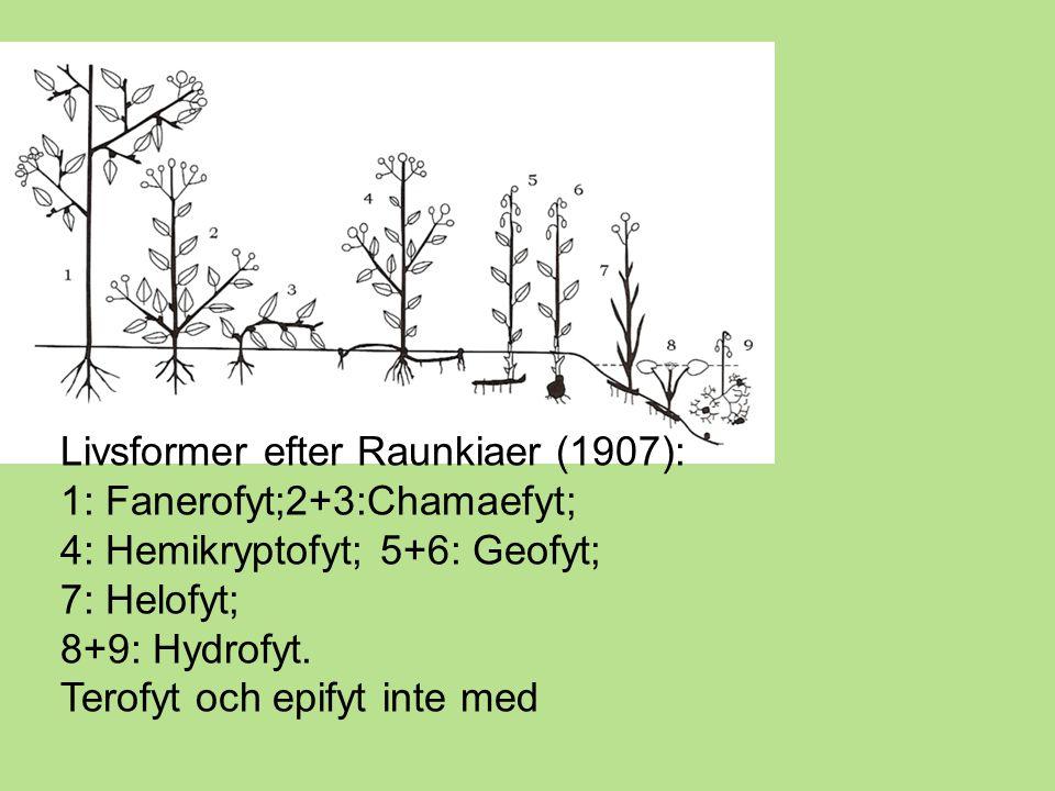 Livsformer efter Raunkiaer (1907): 1: Fanerofyt;2+3:Chamaefyt; 4: Hemikryptofyt; 5+6: Geofyt; 7: Helofyt; 8+9: Hydrofyt.