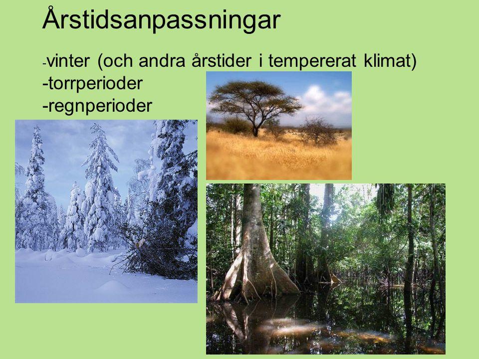 Årstidsanpassningar - vinter (och andra årstider i tempererat klimat) -torrperioder -regnperioder