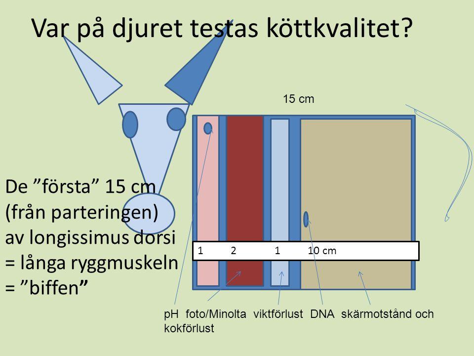 1 2 1 10 cm pH foto/Minolta viktförlust DNA skärmotstånd och kokförlust 15 cm De första 15 cm (från parteringen) av longissimus dorsi = långa ryggmuskeln = biffen Var på djuret testas köttkvalitet?