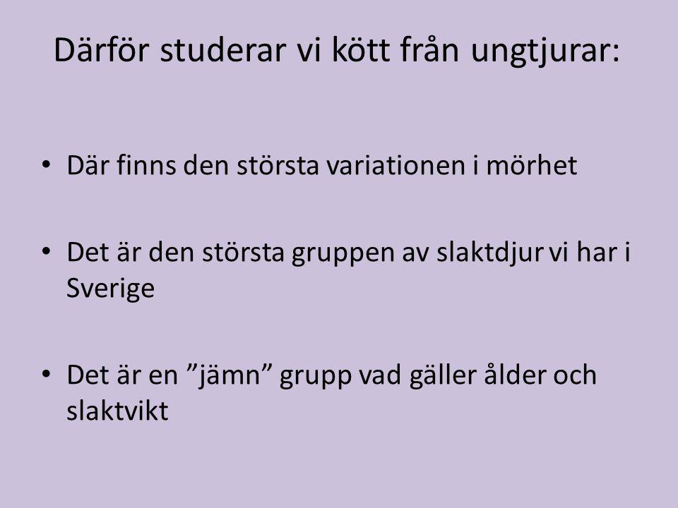 Därför studerar vi kött från ungtjurar: • Där finns den största variationen i mörhet • Det är den största gruppen av slaktdjur vi har i Sverige • Det är en jämn grupp vad gäller ålder och slaktvikt