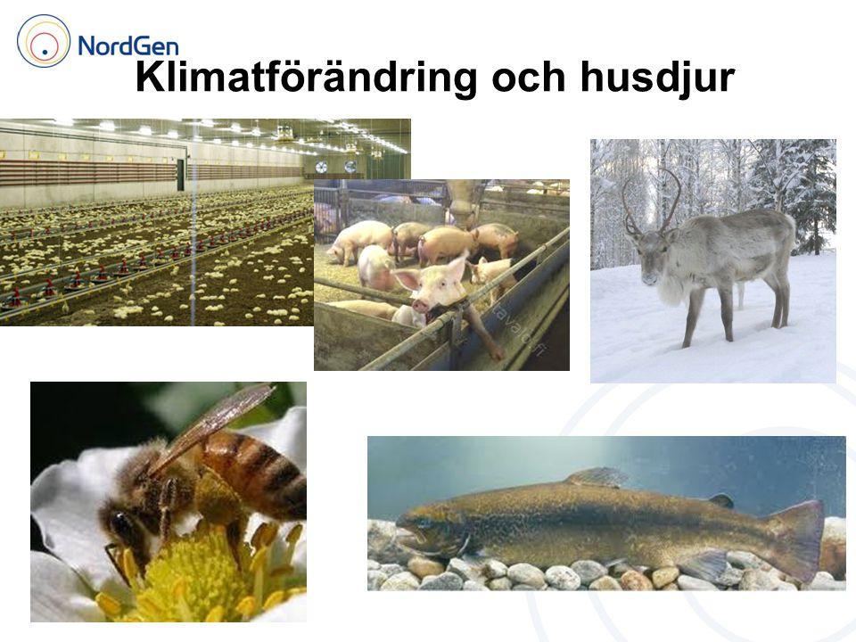 Klimatförändring och husdjur