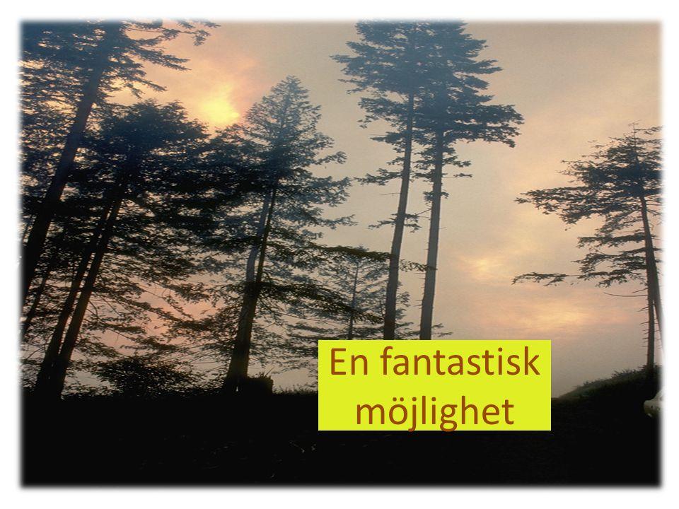 Skogens möjligheter kan samordnas i olika former som kan ge stora vinster.