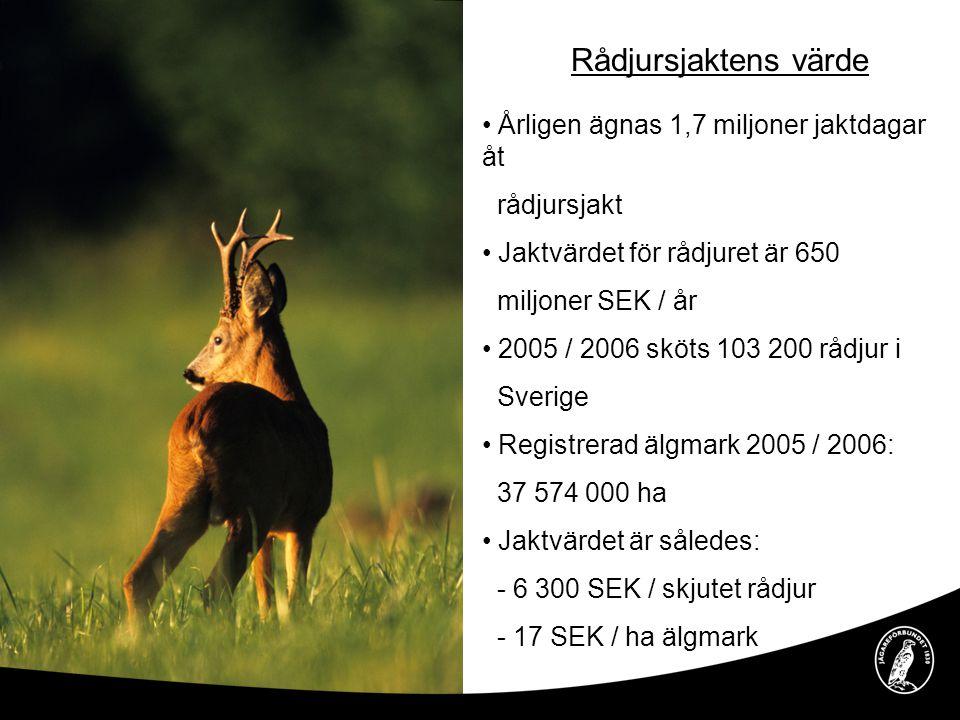Rådjursjaktens värde • Årligen ägnas 1,7 miljoner jaktdagar åt rådjursjakt • Jaktvärdet för rådjuret är 650 miljoner SEK / år • 2005 / 2006 sköts 103