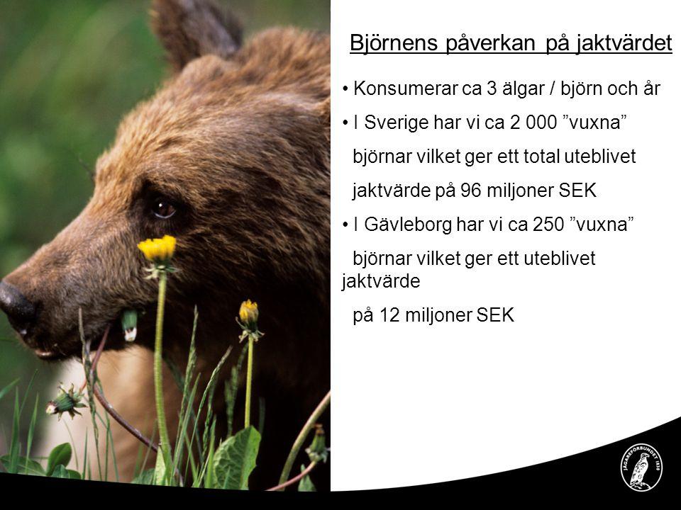 """Björnens påverkan på jaktvärdet • Konsumerar ca 3 älgar / björn och år • I Sverige har vi ca 2 000 """"vuxna"""" björnar vilket ger ett total uteblivet jakt"""