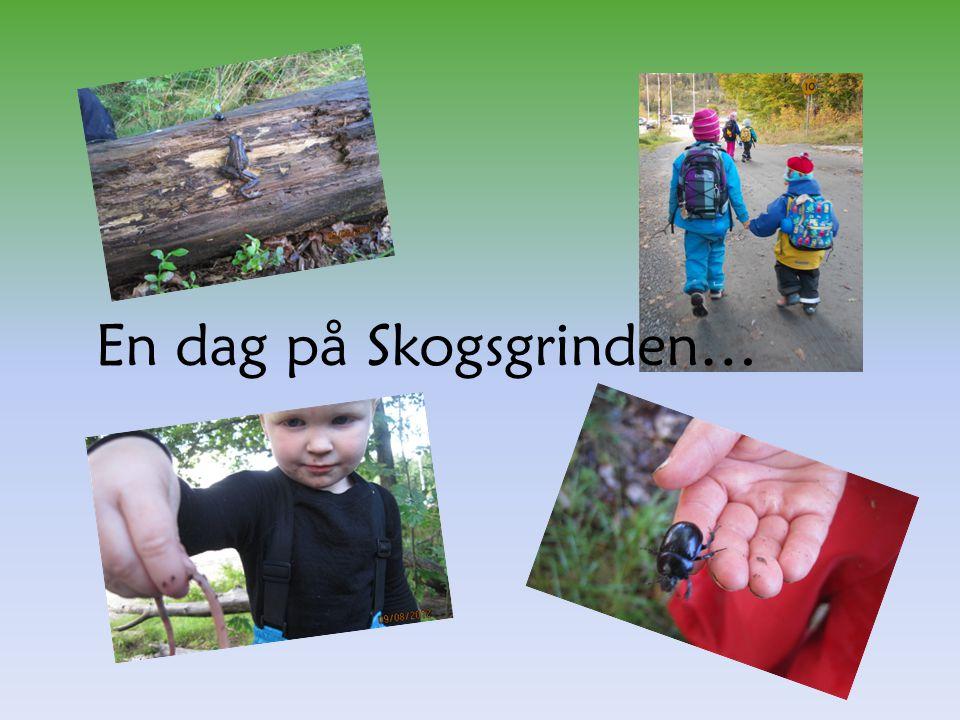 En dag på Skogsgrinden…