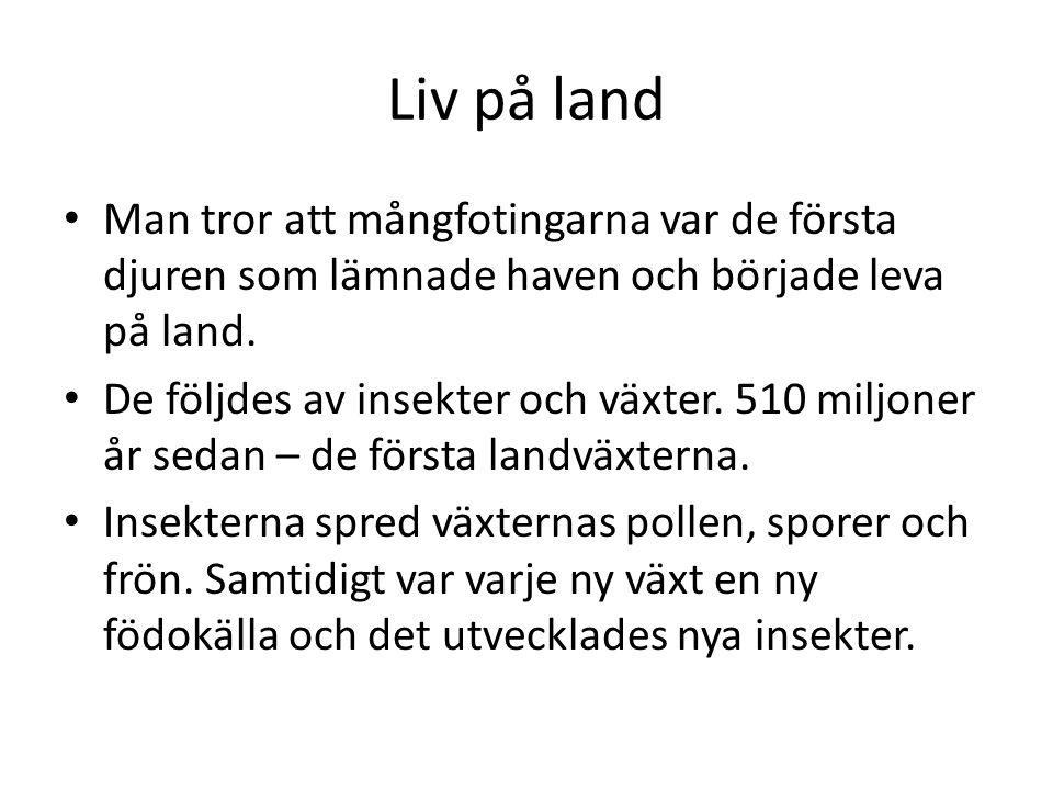 Liv på land • Man tror att mångfotingarna var de första djuren som lämnade haven och började leva på land.