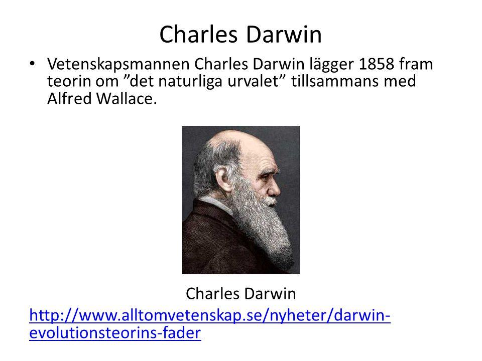 Charles Darwin • Vetenskapsmannen Charles Darwin lägger 1858 fram teorin om det naturliga urvalet tillsammans med Alfred Wallace.