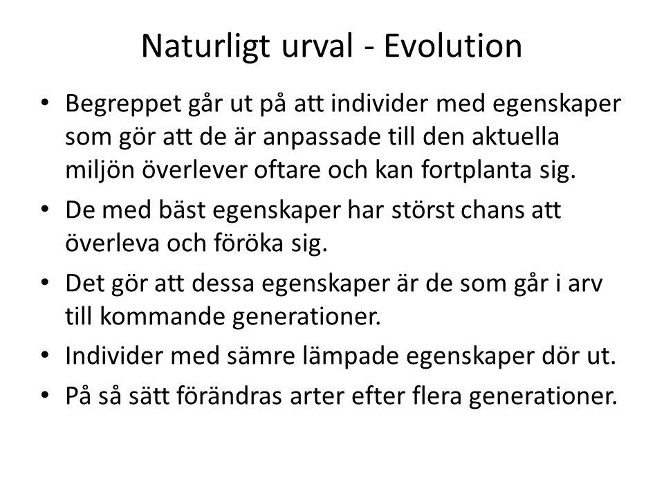 Naturligt urval - Evolution • Begreppet går ut på att individer med egenskaper som gör att de är anpassade till den aktuella miljön överlever oftare och kan fortplanta sig.