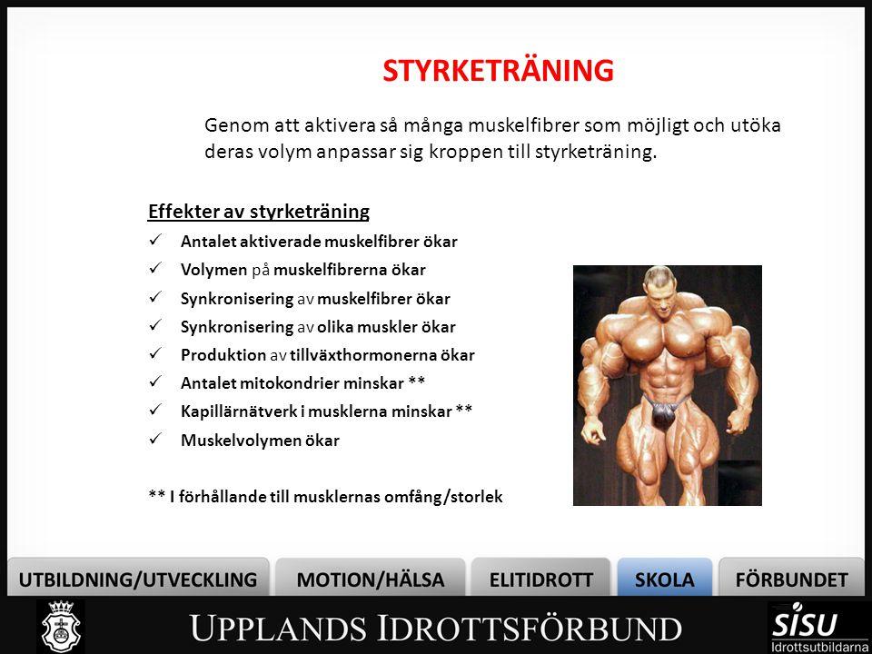 STYRKETRÄNING Effekter av styrketräning  Antalet aktiverade muskelfibrer ökar  Volymen på muskelfibrerna ökar  Synkronisering av muskelfibrer ökar  Synkronisering av olika muskler ökar  Produktion av tillväxthormonerna ökar  Antalet mitokondrier minskar **  Kapillärnätverk i musklerna minskar **  Muskelvolymen ökar ** I förhållande till musklernas omfång/storlek Genom att aktivera så många muskelfibrer som möjligt och utöka deras volym anpassar sig kroppen till styrketräning.