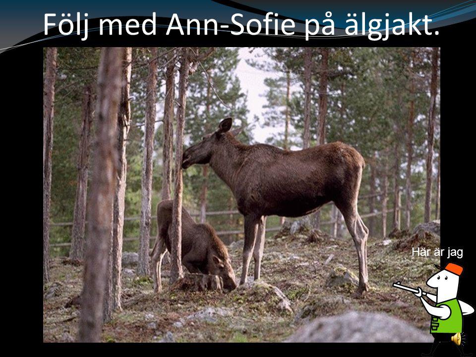 Följ med Ann-Sofie på älgjakt. Här är jag