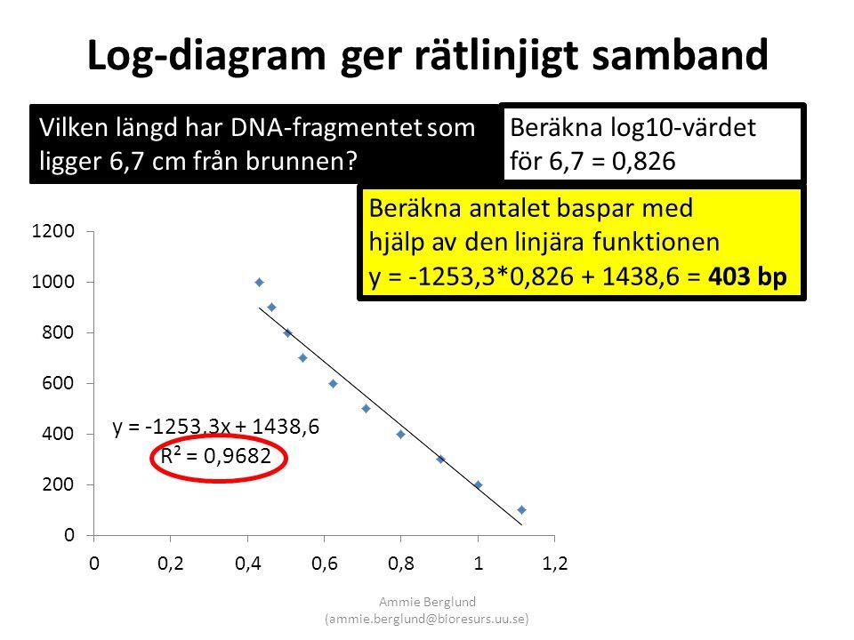 Log-diagram ger rätlinjigt samband Vilken längd har DNA-fragmentet som ligger 6,7 cm från brunnen? Beräkna log10-värdet för 6,7 = 0,826 Beräkna antale
