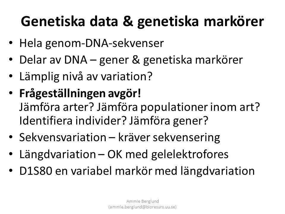 Genetiska data & genetiska markörer • Hela genom-DNA-sekvenser • Delar av DNA – gener & genetiska markörer • Lämplig nivå av variation? • Frågeställni