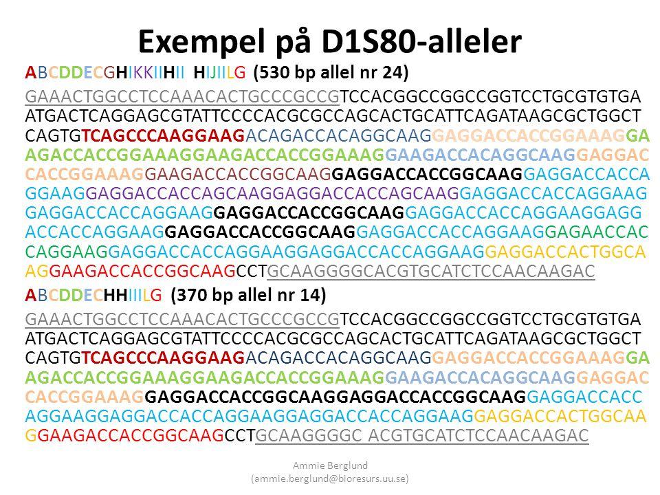 Exempel på D1S80-alleler ABCDDECGHIKKIIHII HIJIILG (530 bp allel nr 24) GAAACTGGCCTCCAAACACTGCCCGCCGTCCACGGCCGGCCGGTCCTGCGTGTGA ATGACTCAGGAGCGTATTCCCC
