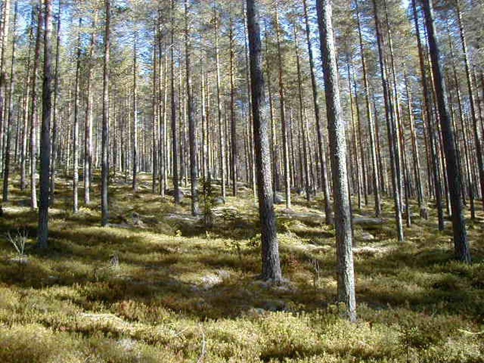 Var produceras användbar forskningsinformation? Clas Fries Skogsstyrelsen Skog Nord, Umeå