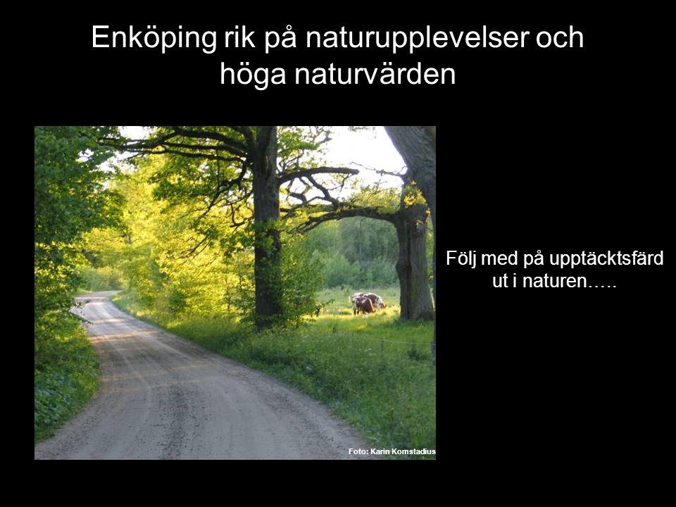 Enköping rik på naturupplevelser och höga naturvärden Följ med på upptäcktsfärd ut i naturen….. Foto: Karin Komstadius