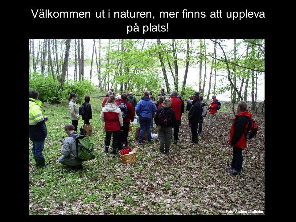 Välkommen ut i naturen, mer finns att uppleva på plats! Foto: Anders Lindholm