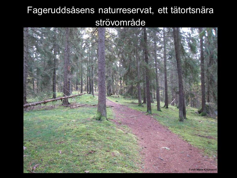 Fageruddsåsens naturreservat, ett tätortsnära strövområde Foto: Marie Knutsson
