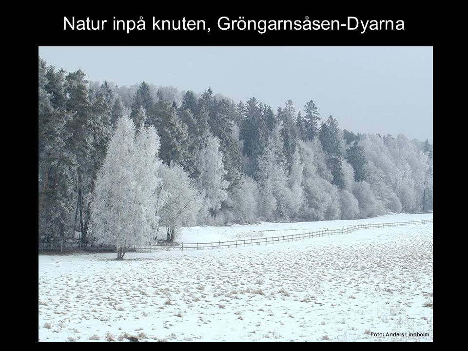 Natur inpå knuten, Gröngarnsåsen-Dyarna Foto: Anders Lindholm