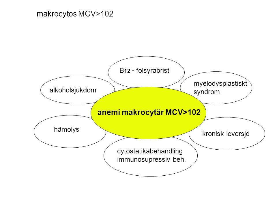 makrocytos MCV>102 anemi makrocytär MCV>102 alkoholsjukdom B 12 - folsyrabrist myelodysplastiskt syndrom hämolys kronisk leversjd cytostatikabehandlin