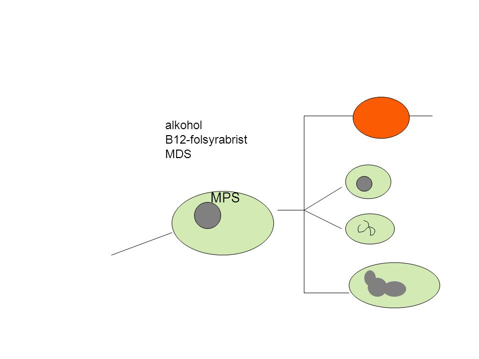 alkohol B12-folsyrabrist MDS MPS