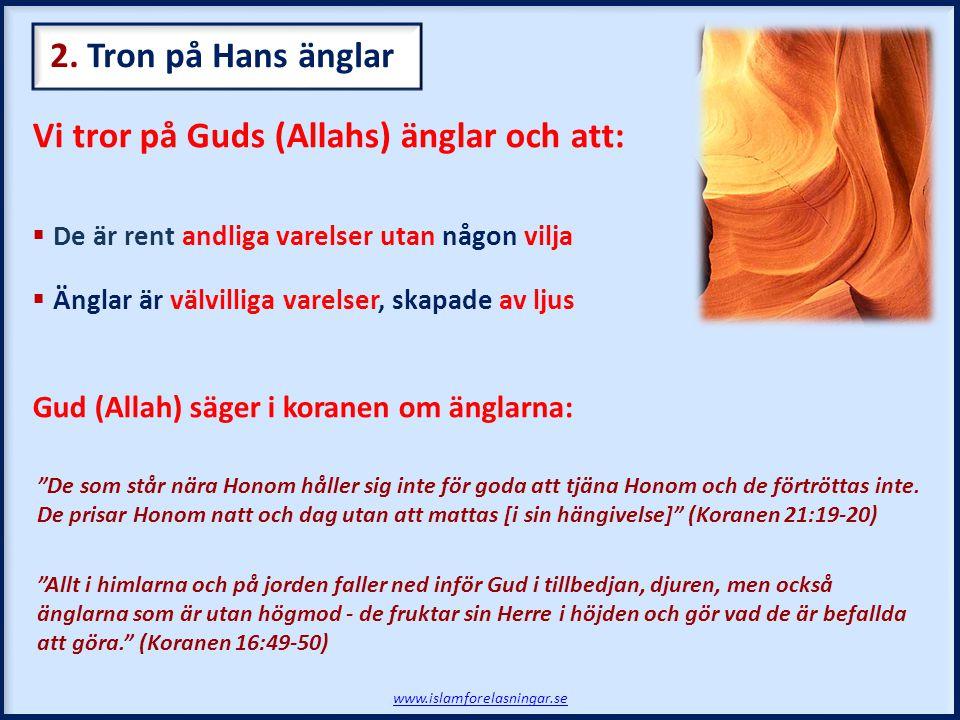 Vi tror på Guds (Allahs) änglar och att:  De är rent andliga varelser utan någon vilja  Änglar är välvilliga varelser, skapade av ljus Gud (Allah) s