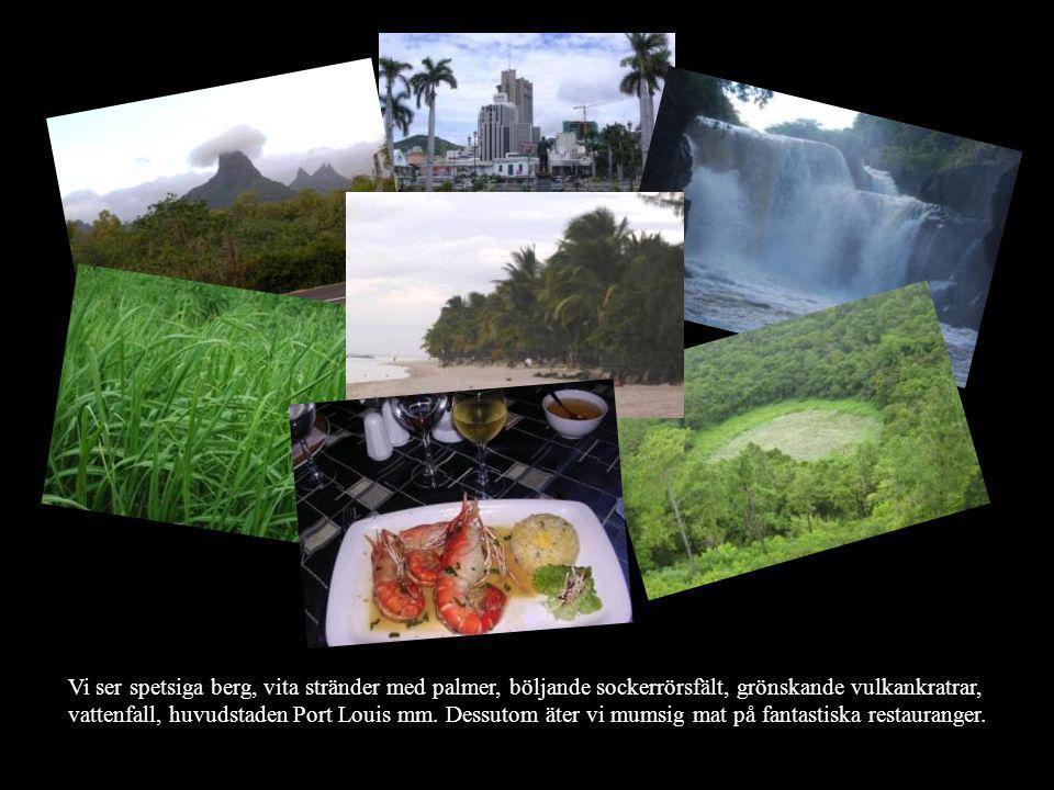 Vi ser spetsiga berg, vita stränder med palmer, böljande sockerrörsfält, grönskande vulkankratrar, vattenfall, huvudstaden Port Louis mm. Dessutom äte