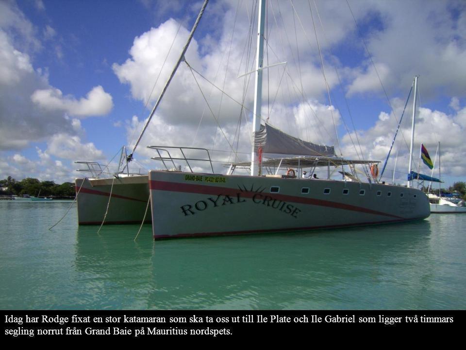 Idag har Rodge fixat en stor katamaran som ska ta oss ut till Ile Plate och Ile Gabriel som ligger två timmars segling norrut från Grand Baie på Mauri
