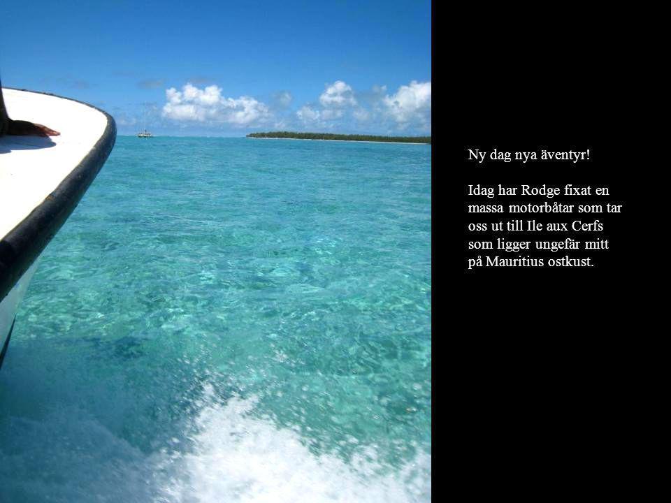 Ny dag nya äventyr! Idag har Rodge fixat en massa motorbåtar som tar oss ut till Ile aux Cerfs som ligger ungefär mitt på Mauritius ostkust.