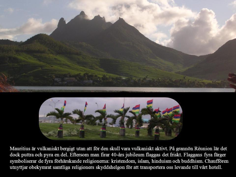 Mauritius är vulkaniskt bergigt utan att för den skull vara vulkaniskt aktivt. På grannön Réunion lär det dock puttra och pyra en del. Eftersom man fi