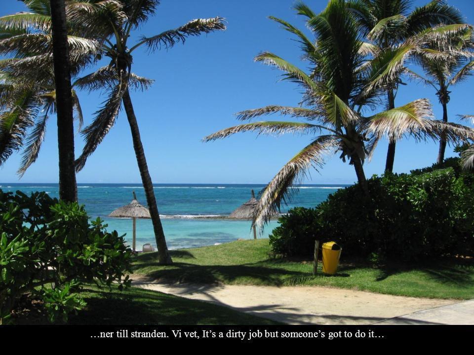 Mauritius känns exotiskt. Det är väldigt grönt och det finns vackra blommor …