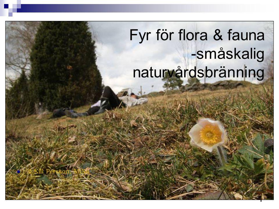 1 Fyr för flora & fauna -småskalig naturvårdsbränning  © Kill Persson, MiNa