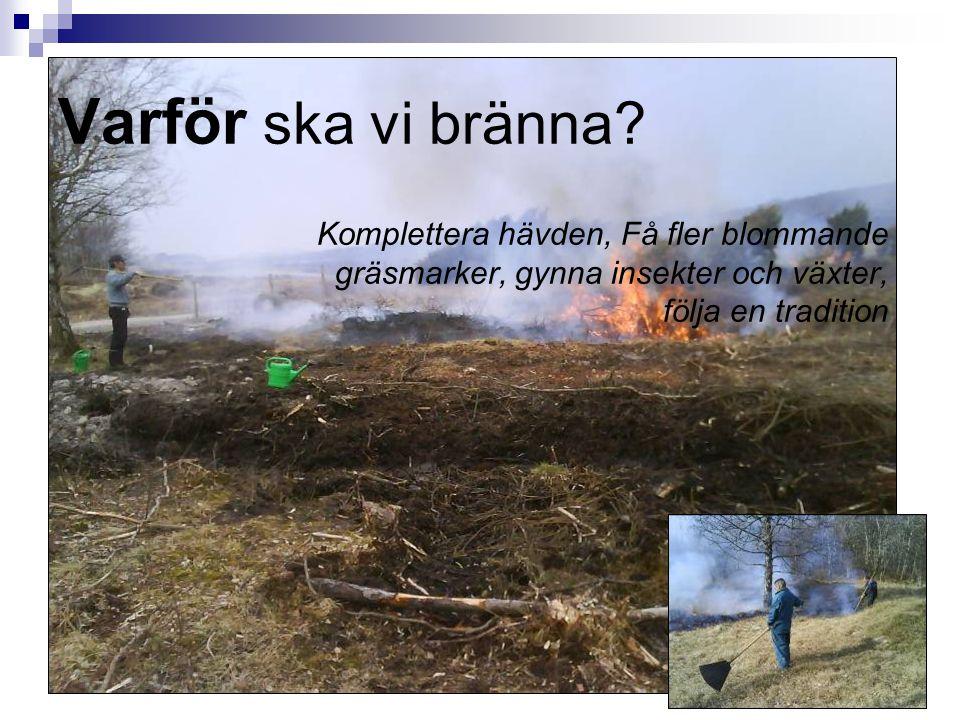 2 Varför ska vi bränna? Komplettera hävden, Få fler blommande gräsmarker, gynna insekter och växter, följa en tradition