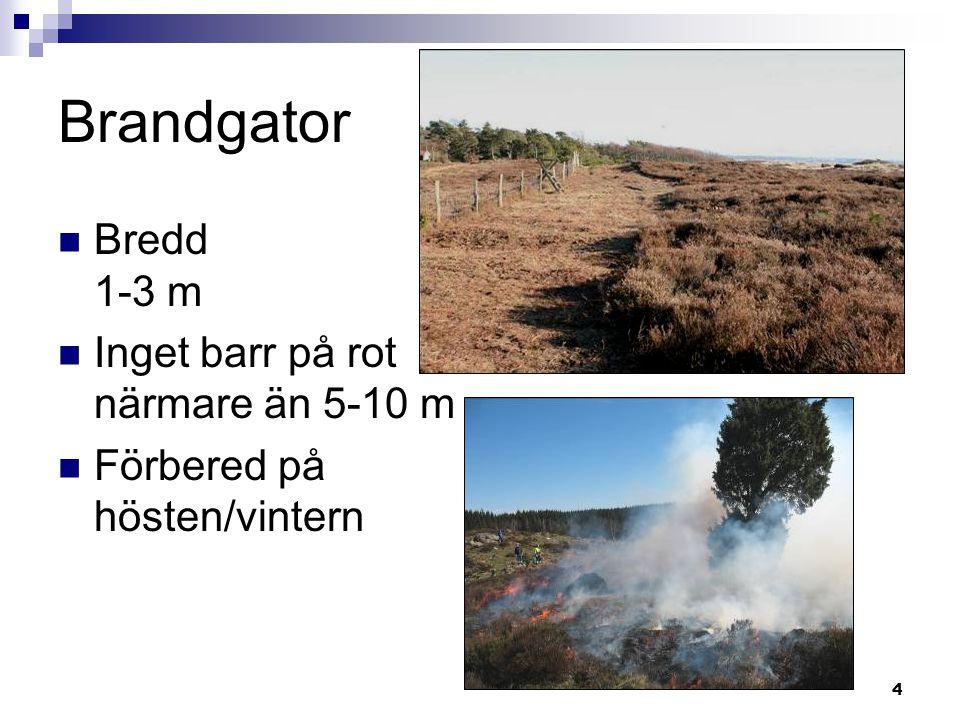 4 Brandgator  Bredd 1-3 m  Inget barr på rot närmare än 5-10 m  Förbered på hösten/vintern