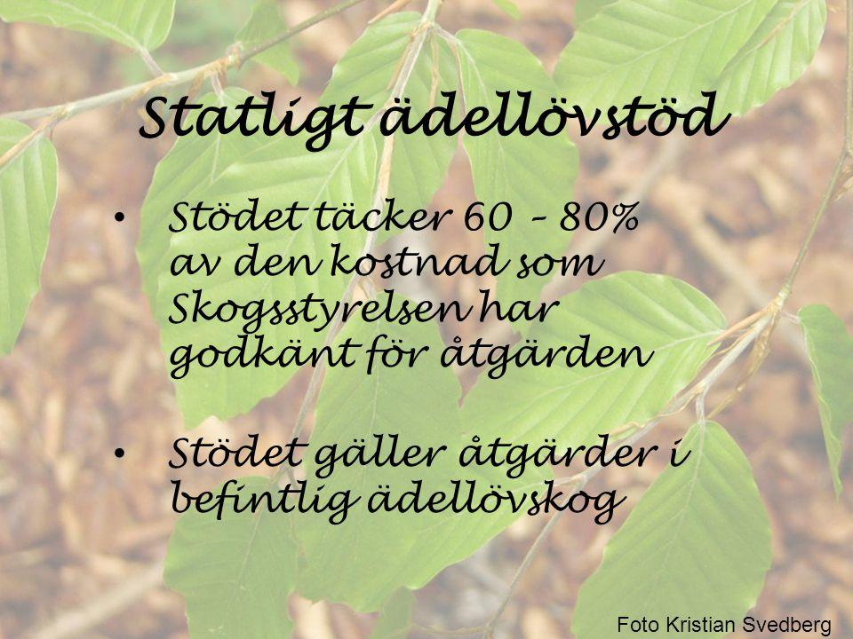 Exempel på stödberättigade åtgärder - föryngringsåtgärder • Markberedning • Stängsling • Plantering Ersättning ges med 80% av godkända kostnader Foto Kristian Svedberg