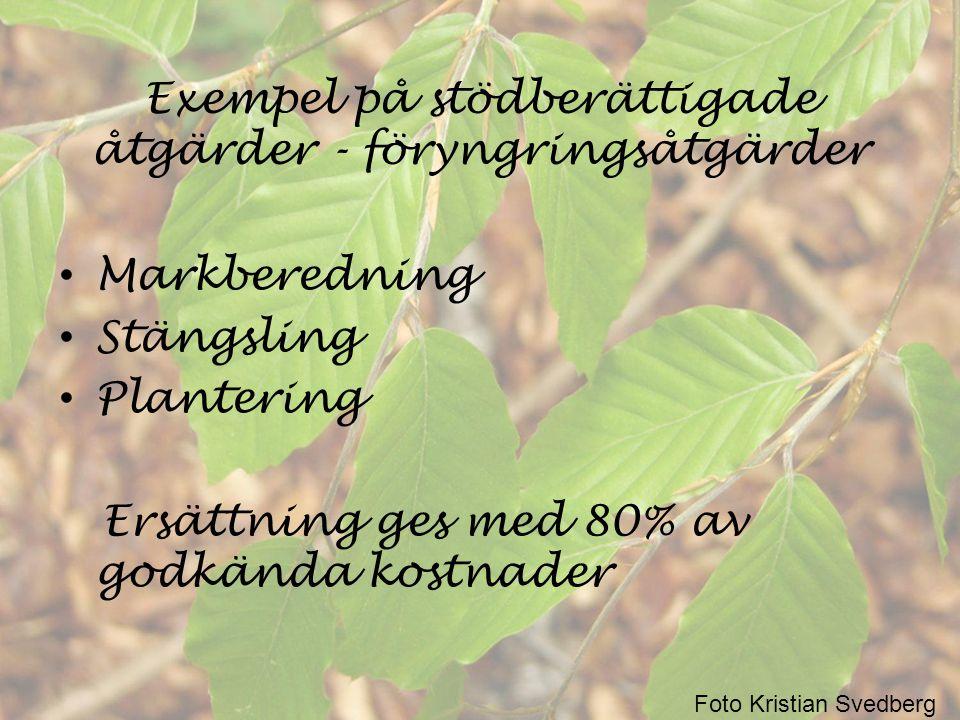 Exempel på stödberättigade åtgärder – återväxtvård • Hjälpplantering • Gräsrensning • Stängselvård Ersättning ges med 80% av godkända kostnader Foto Kristian Svedberg