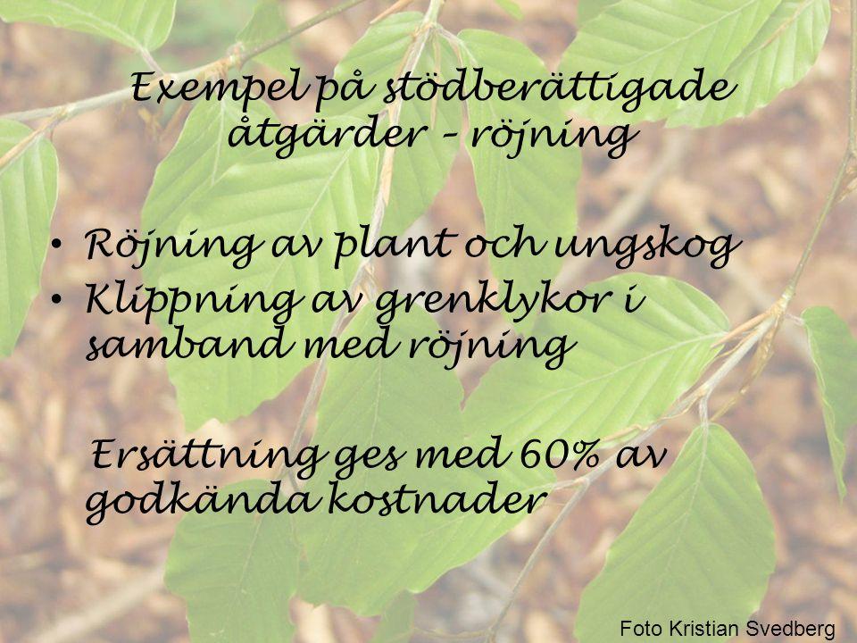 Exempel på stödberättigade åtgärder – röjning • Röjning av plant och ungskog • Klippning av grenklykor i samband med röjning Ersättning ges med 60% av