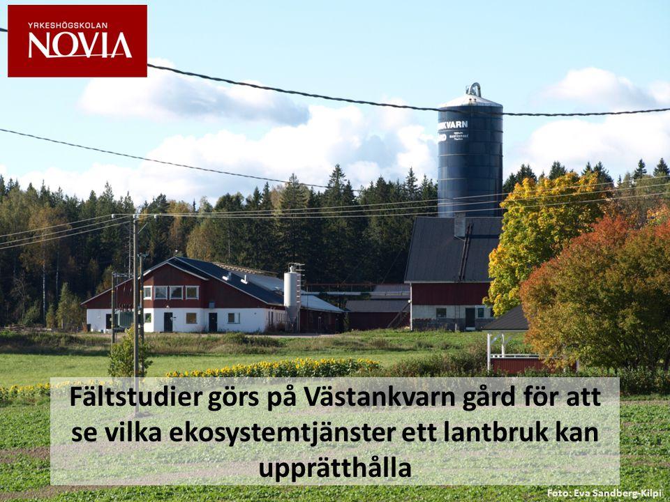 Fältstudier görs på Västankvarn gård för att se vilka ekosystemtjänster ett lantbruk kan upprätthålla Foto: Eva Sandberg-Kilpi