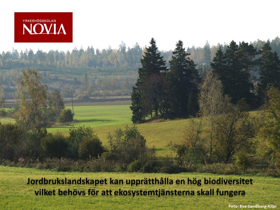 Jordbrukslandskapet kan upprätthålla en hög biodiversitet vilket behövs för att ekosystemtjänsterna skall fungera Foto: Eva Sandberg-Kilpi