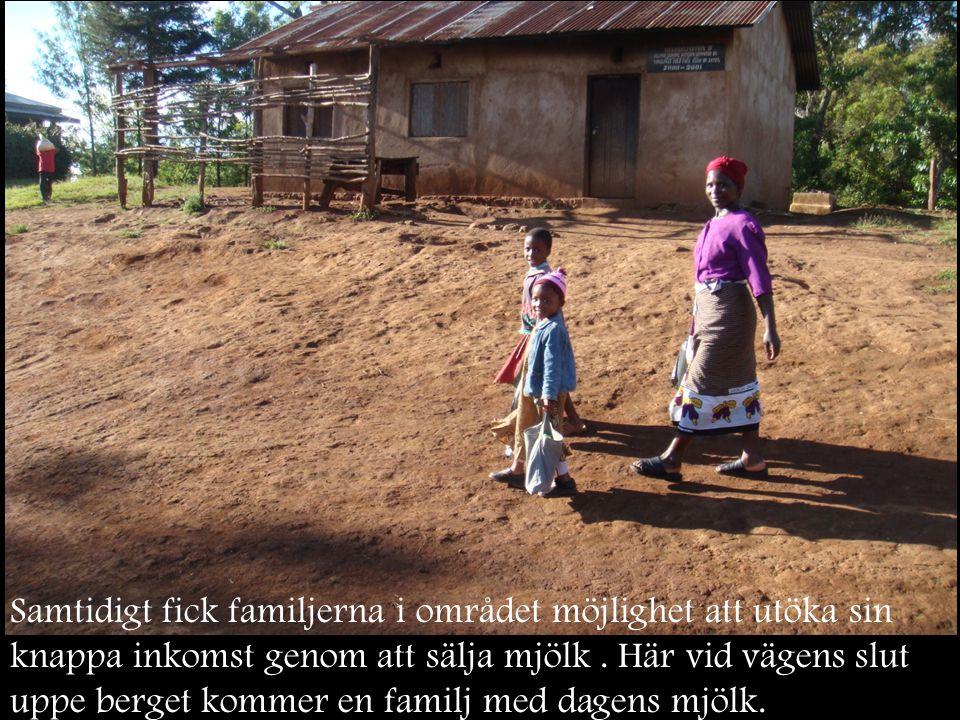 Samtidigt fick familjerna i området möjlighet att utöka sin knappa inkomst genom att sälja mjölk. Här vid vägens slut uppe berget kommer en familj med